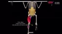 体肤尼-动画演示你应该避免的10个错误训练动作