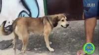 Chết cười với những con chó bá đạo nhất thế giới - Thế giới động v