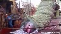 渔民捞起满满一网鱼  打开渔网后现场所有人傻眼了