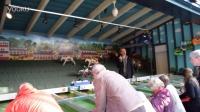 爷爷奶奶也爱玩赛马游戏机