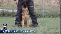 K9 Ambassador(2)