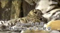 中国传统文化的核心究竟是什么(人生百事指南)