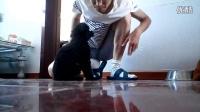 泰迪(流浪狗)——性格弱小,耐心教导,亲一下(挺乖的狗干嘛丢弃呢?)