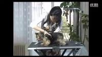 宠物美容准备步骤【必看】