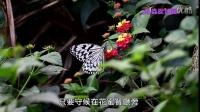 《昆蟲捉迷藏》以柔克剛的祕密【華麗的舞者:訪花蝴蝶】