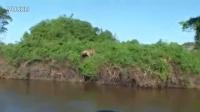 惊!厉害!豹子秒杀鳄鱼