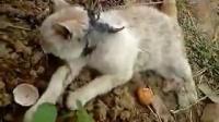 可怜小猫被人下毒Ⅰ