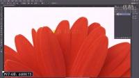 PhotoshopCC 2015课时19.-套索系列工具的操作