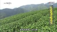 台湾南投找茶
