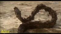 毒蛇骚扰红蚂蚁被吃只剩骨头