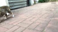 流浪猫小母猫和她孩子