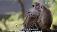 刚出生的小猴子原来这么好玩,太调皮了