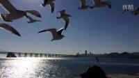 星海广场海鸥?