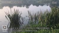 明杰传统钓系列(二)初秋钓鲫鱼