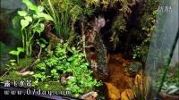 07day造景 雨林缸 60 45 60cm 雾化效果