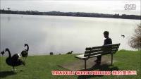 奥克兰Pupuke湖