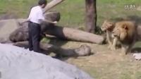 """实拍吸毒男子跳入动物园狮子坑 大喊""""耶稣救我"""""""