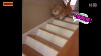 这只狗狗会梦游,睡觉的时候突然醒来做出了这怪异的动作,吓坏主