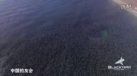 航拍:沙滩被黑色生物笼罩 长达数公里