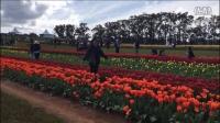 【VLOG】墨尔本郁金香公园一日游Tulip Festival