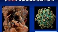 高一生物-课堂实录01 第1讲 从生物圈到细胞
