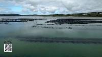 爱尔兰顶级生蚝养殖场,媲美法国蚝场,买生蚝就要认准这样的产地