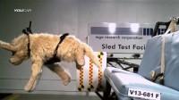 有点惨!狗狗安全碰撞测试
