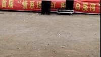 贵州山歌 纳雍总溪河樱桃节山歌大赛