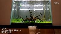 露飞水景 综合缸 咖啡厅各种水景缸展示