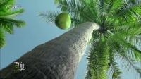 维他奶植物阳光-椰子篇