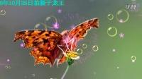 菜粉蝶  花蝴蝶