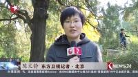 北京:香山红叶层林尽染  进入最佳观赏期 东方新闻 161030