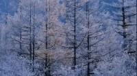 太极音乐《雪之梦》蓝色野豌豆制