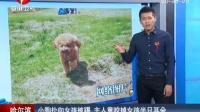 哈尔滨:小狗扑向女孩被踢 主人竟咬掉女孩半只耳朵[高清版]