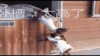 黄网站色成年片