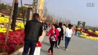 湖北荆门菊花展一日游