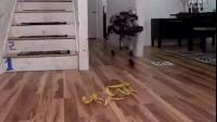 当智能机器人踩到香蕉皮时,他会如何怎么处理