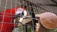 索契的动物疗法