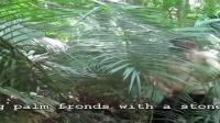 澳洲小哥荒野求生系列第2集《茅草圆顶小屋》标清
