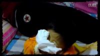 可爱宝宝摸妈妈屁股搞笑版视频23