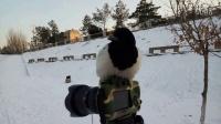 小喜鹊抢劫相机讲哲理