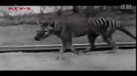 人与自然之狮子树下_动物世界惊险角逐一_自然传奇动物生存鳄鱼