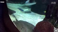 Reefyz海友志-水族餐厅的200,000加仑海水缸