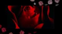 【咖妃说娱乐】影视剧中14对红白玫瑰混剪!你站哪几对?!
