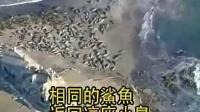 动物世界大雁的视频_番禺长隆香江野生动物世界旅游_cctv动物世界北极熊全集