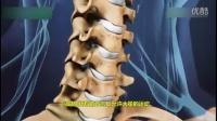 颈椎间盘突出解剖视频