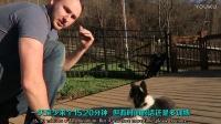 【熊叔实验室】 教你如何训练狗狗坐下