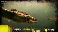 2017.01.07 寻找超级大鱼:红白蓝巨鱼