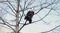 #海外# 福妮挂树上