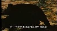 笨狗熊繁衍后代的方式,只能说真的是熊孩子